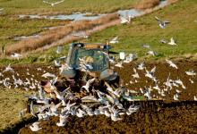 Gulls and Tractor DM1246