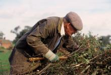 Hedge Laying DM0318
