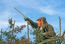 Hedge Laying DM1382