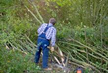 Hedge Laying DM1383