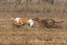 Hare Coursing 1 DM0199