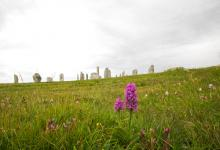 Callanish Stones and Orchids DM1295