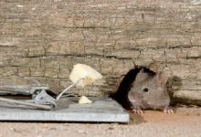 House Mouse and Trap DM0592
