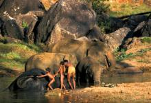 Boys Washing Indian Elephants DM0234