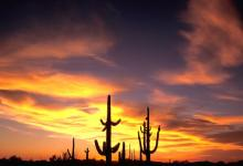 Sunset in  Organ Pipe NP DM0304